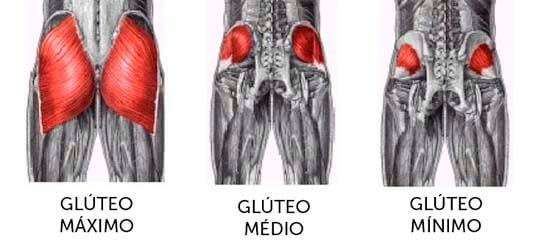 Glúteo medio y mayor.