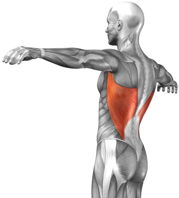 musculo dorsal mayor