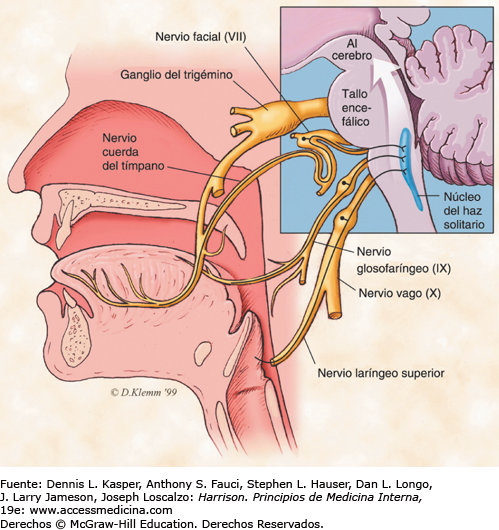 Lesión de la cuerda del tímpano