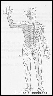 Traumatismos vertebrales (2)